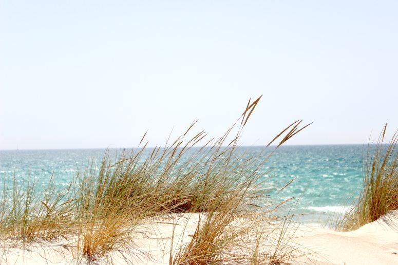 beach-dawn-dune-662994